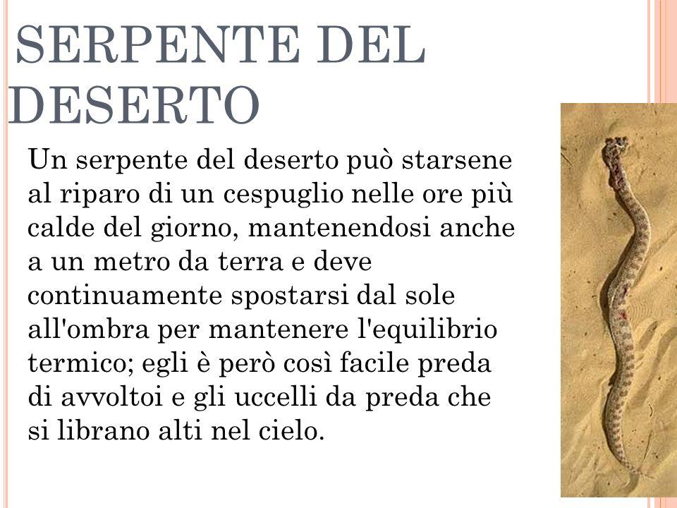 SERPENTE DEL DESERTO