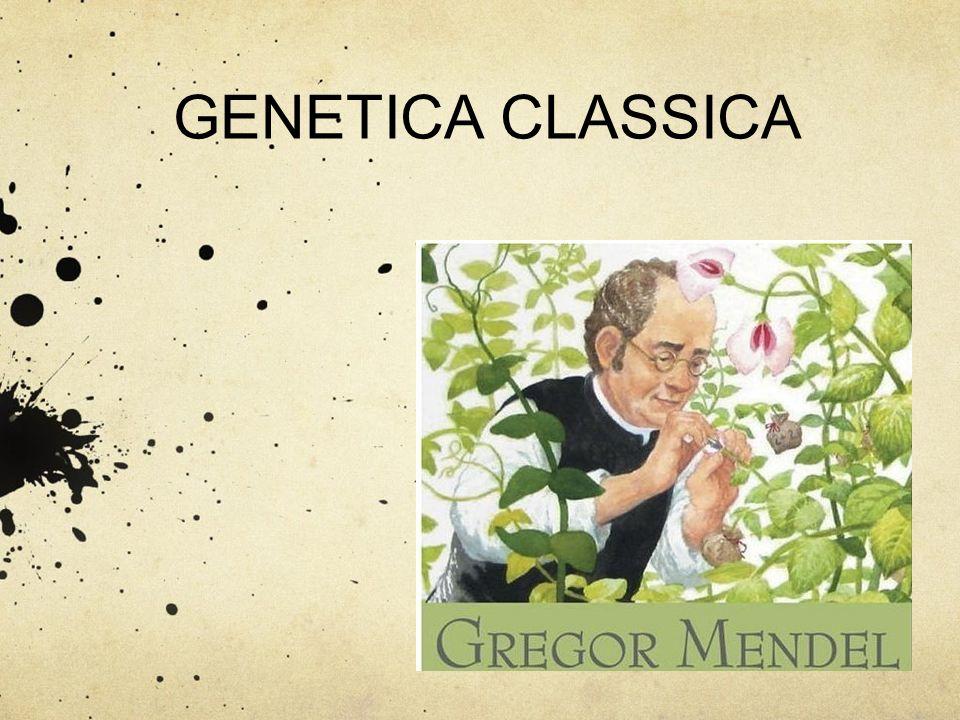 GENETICA CLASSICA