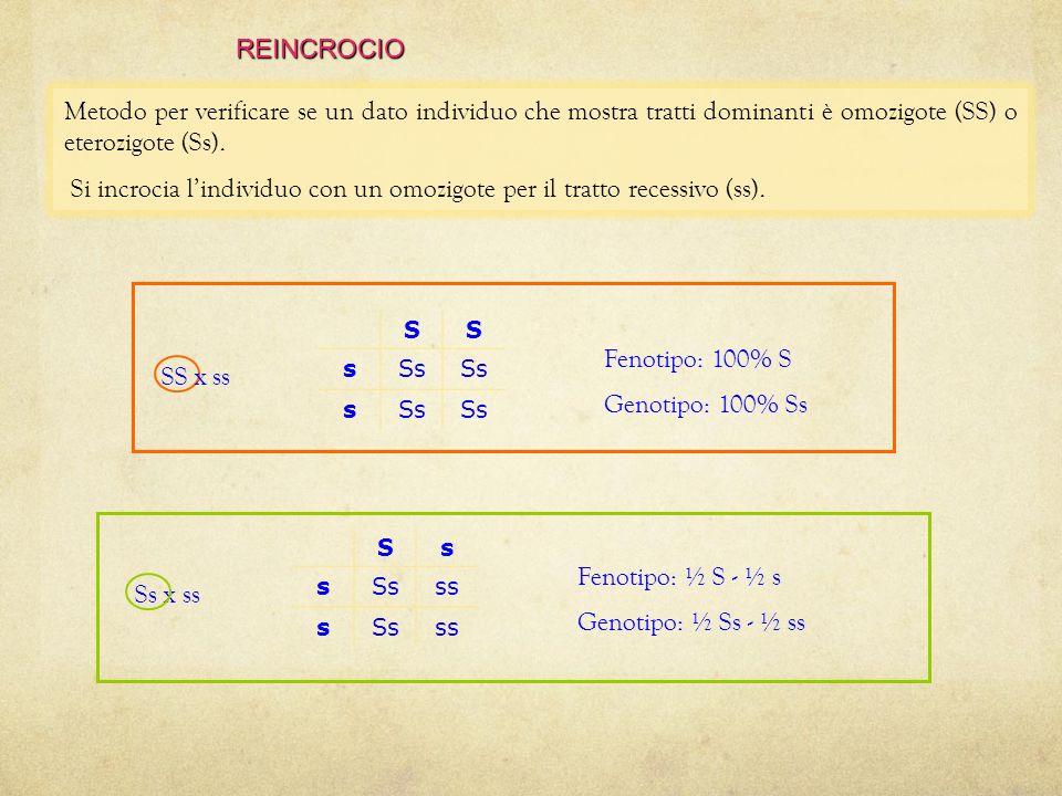 Si incrocia l'individuo con un omozigote per il tratto recessivo (ss).