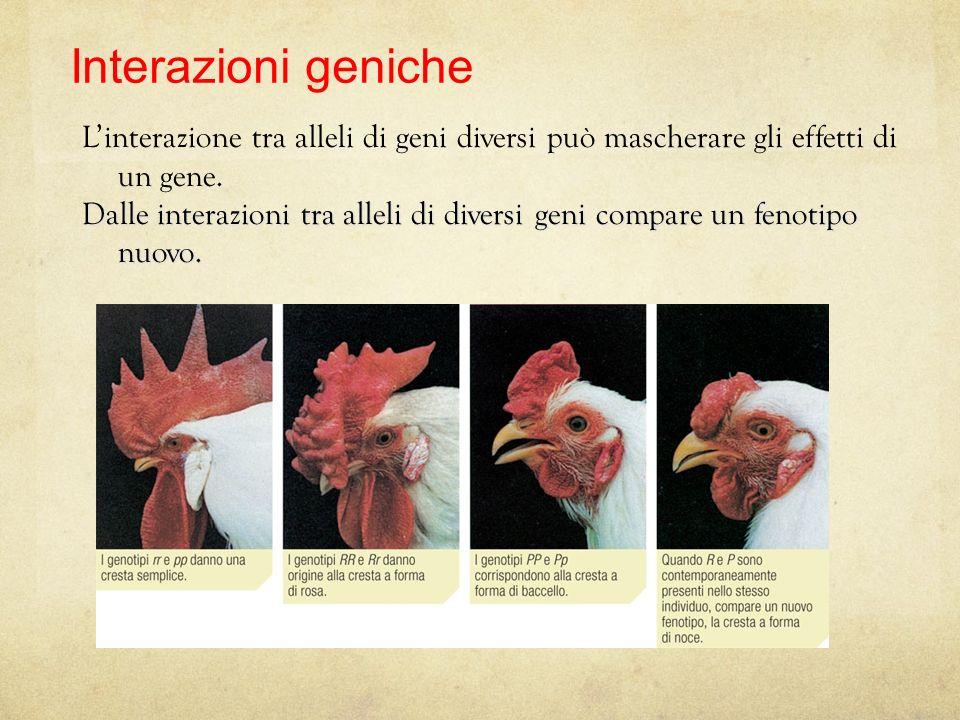 17/08/12 27/11/11. Interazioni geniche. L'interazione tra alleli di geni diversi può mascherare gli effetti di un gene.