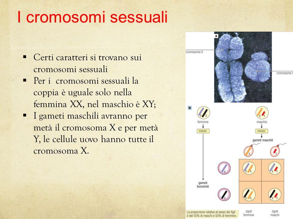 I cromosomi sessuali Certi caratteri si trovano sui cromosomi sessuali