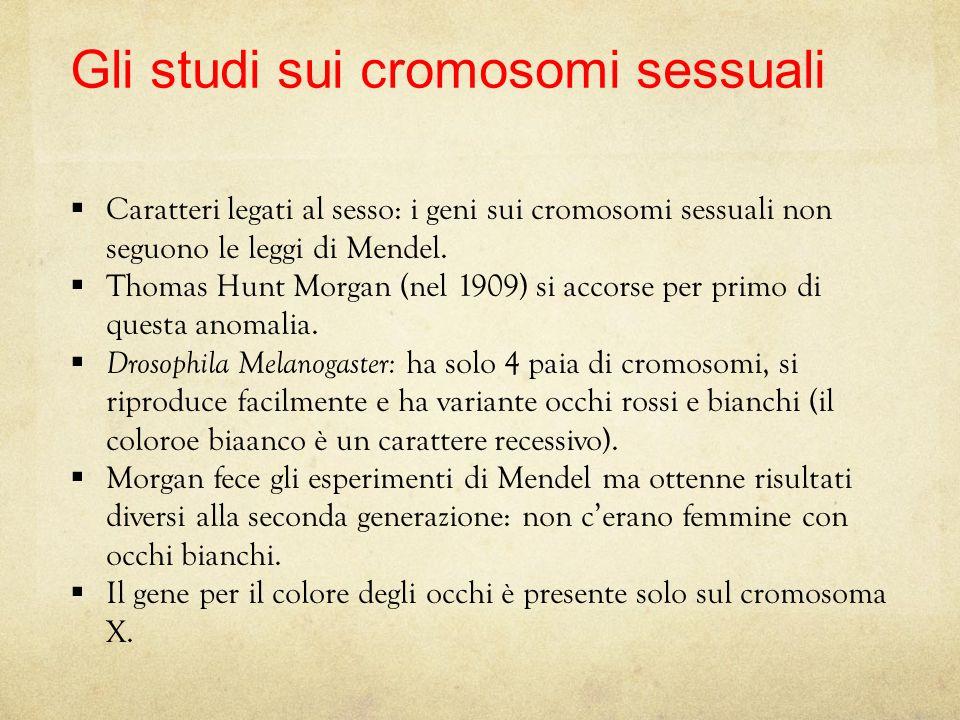 Gli studi sui cromosomi sessuali