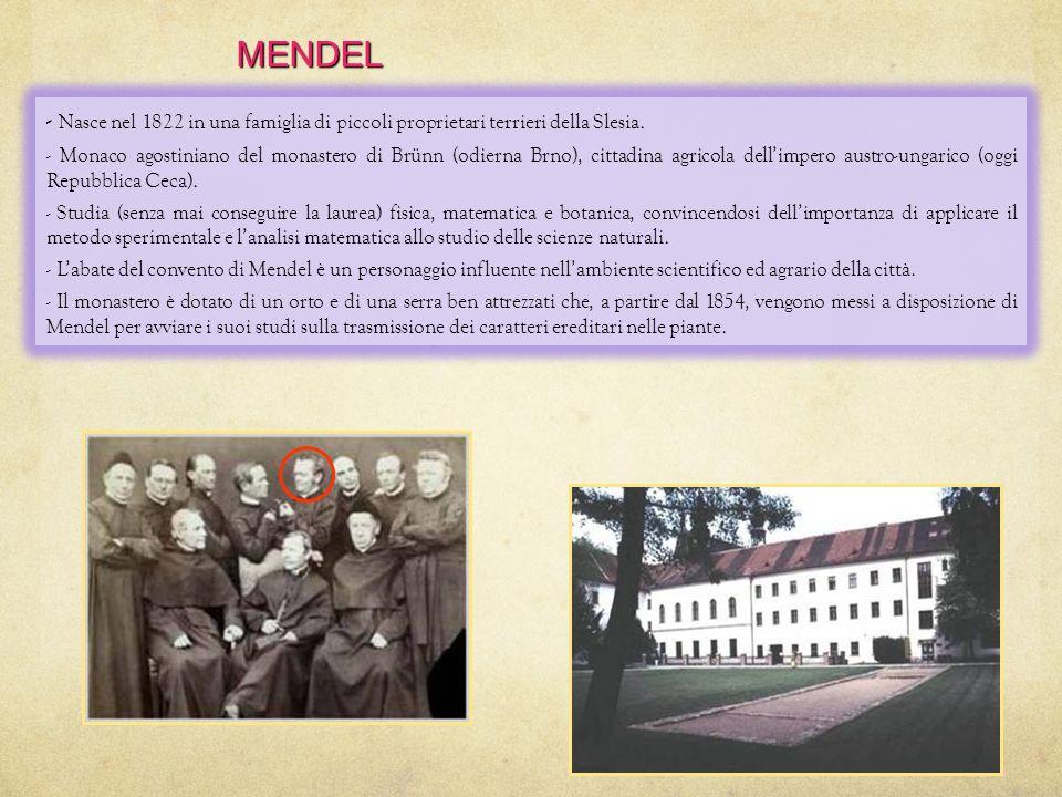 MENDEL - Nasce nel 1822 in una famiglia di piccoli proprietari terrieri della Slesia.