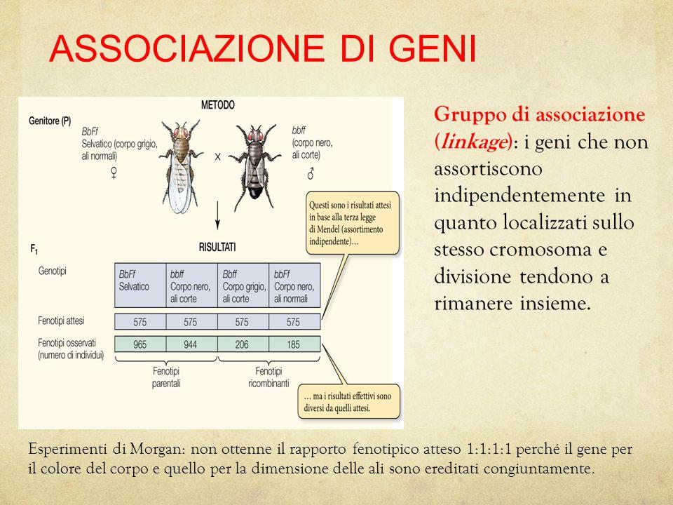 27/11/11 17/08/12. ASSOCIAZIONE DI GENI.