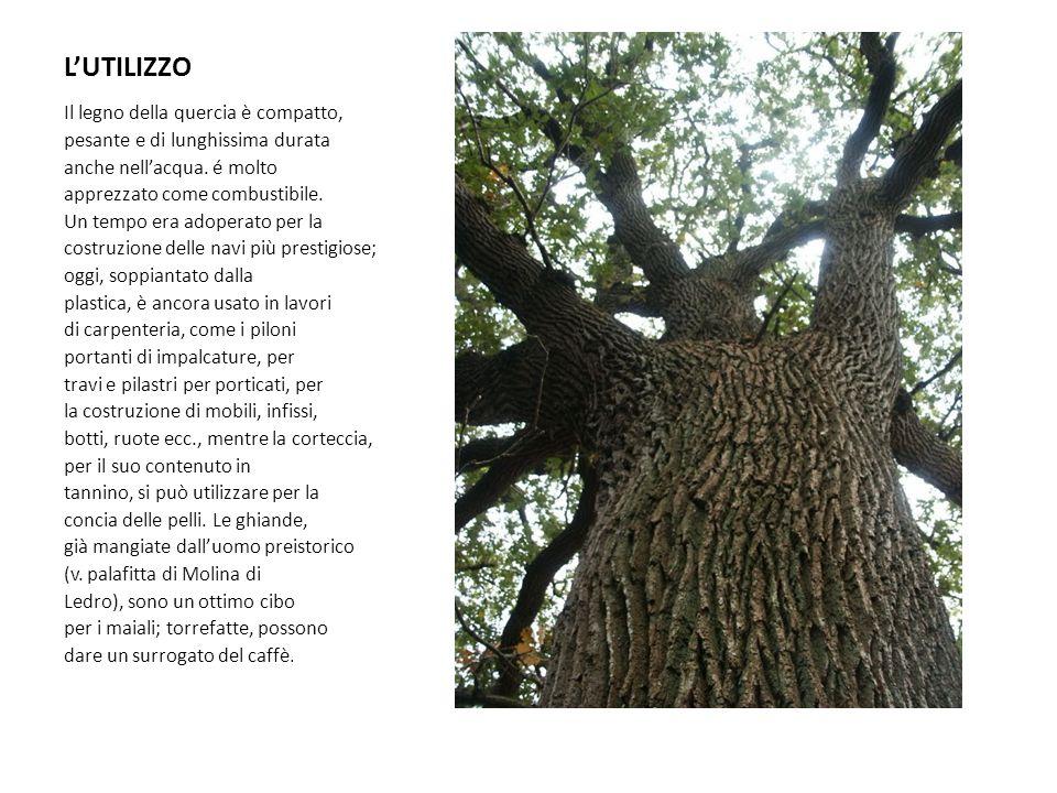 L'UTILIZZO Il legno della quercia è compatto,