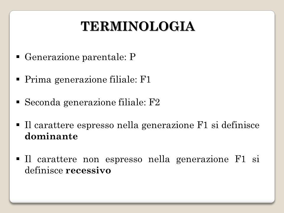 TERMINOLOGIA Generazione parentale: P Prima generazione filiale: F1