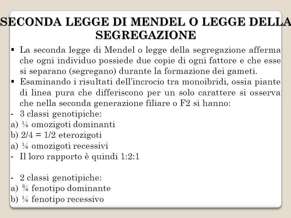 SECONDA LEGGE DI MENDEL O LEGGE DELLA SEGREGAZIONE