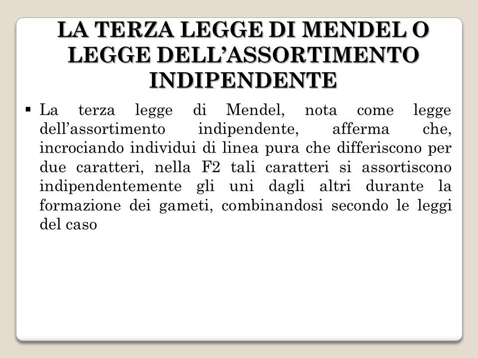 LA TERZA LEGGE DI MENDEL O LEGGE DELL'ASSORTIMENTO INDIPENDENTE