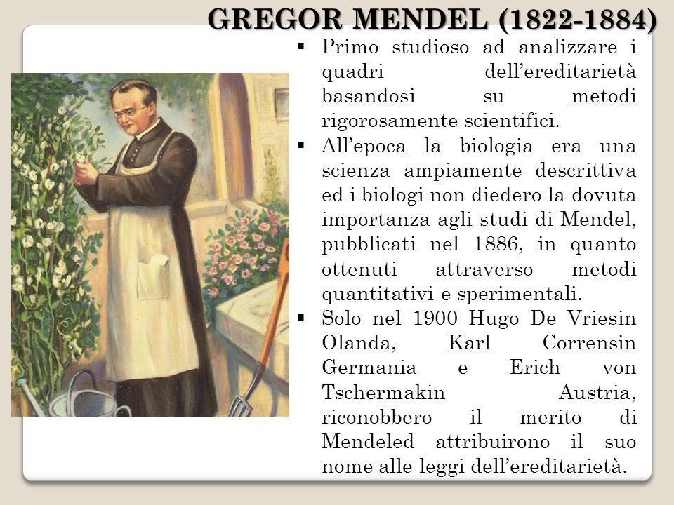 GREGOR MENDEL (1822-1884) Primo studioso ad analizzare i quadri dell'ereditarietà basandosi su metodi rigorosamente scientifici.