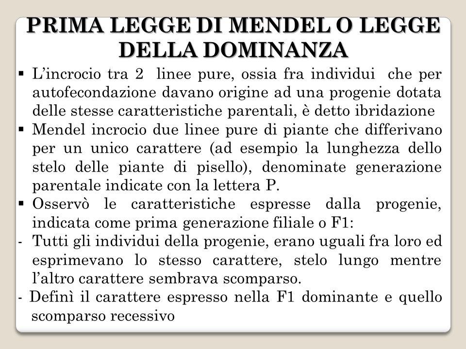 PRIMA LEGGE DI MENDEL O LEGGE DELLA DOMINANZA