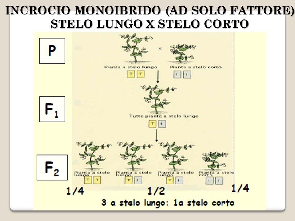 INCROCIO MONOIBRIDO (AD SOLO FATTORE) STELO LUNGO X STELO CORTO