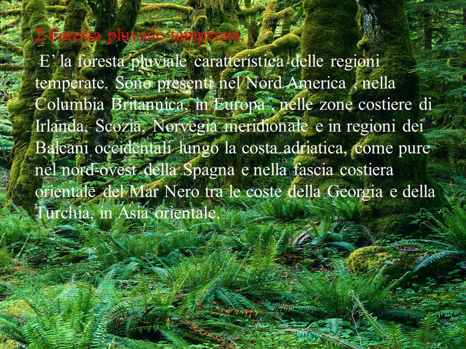 2-Foresta pluviale temperata.
