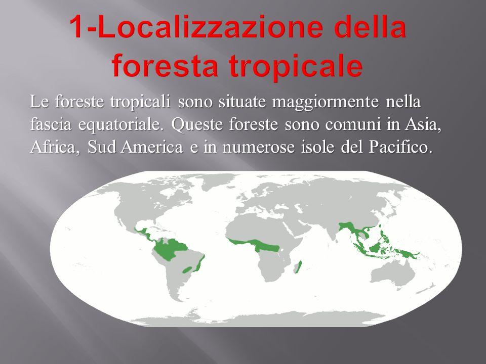 1-Localizzazione della foresta tropicale