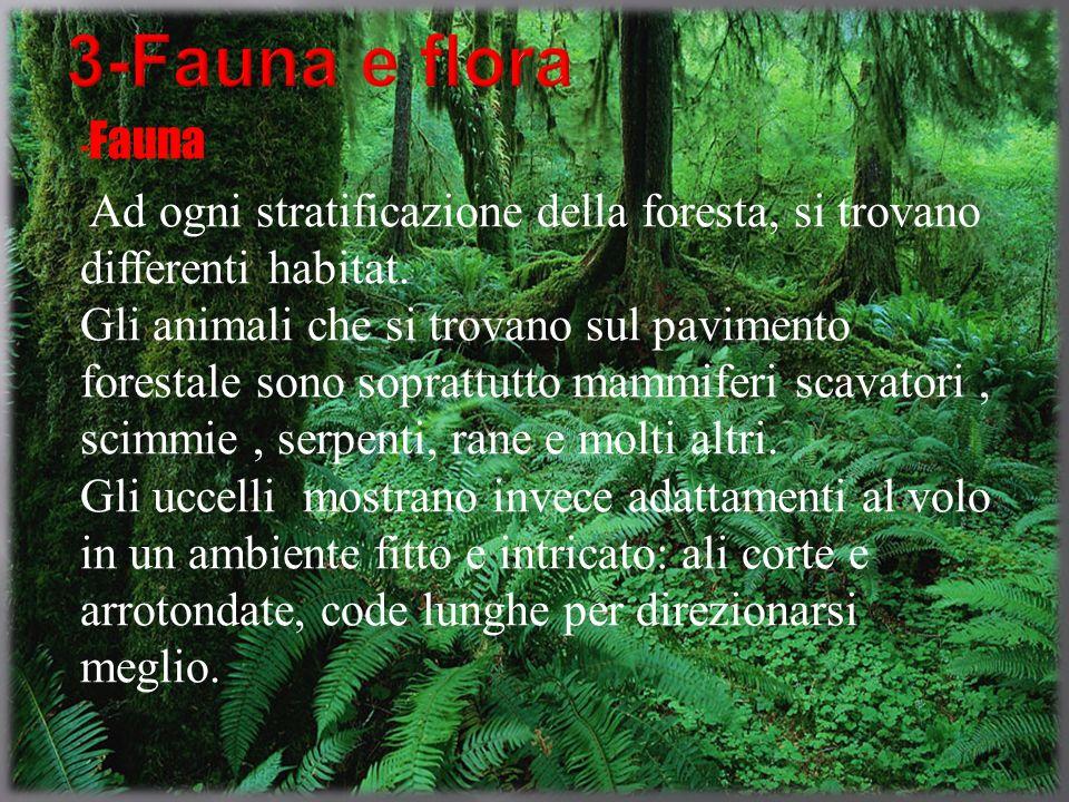 3-Fauna e flora -Fauna.