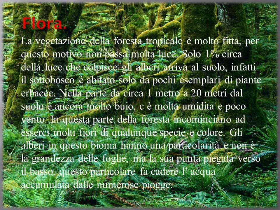 Tropicale tommaso filucchi 10 slide ppt video online - Gli animali della foresta pluviale di daintree ...
