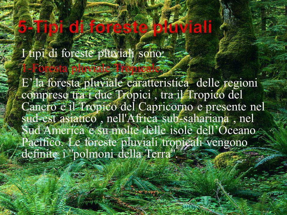 5-Tipi di foreste pluviali