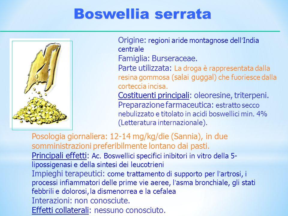 Boswellia serrataOrigine: regioni aride montagnose dell'India centrale. Famiglia: Burseraceae.