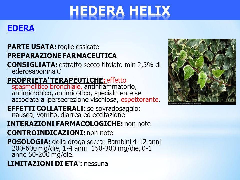 HEDERA HELIX EDERA PARTE USATA: foglie essicate