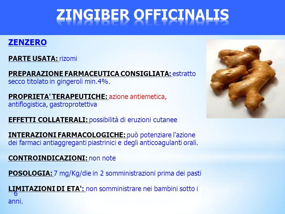 ZINGIBER OFFICINALIS ZENZERO PARTE USATA: rizomi