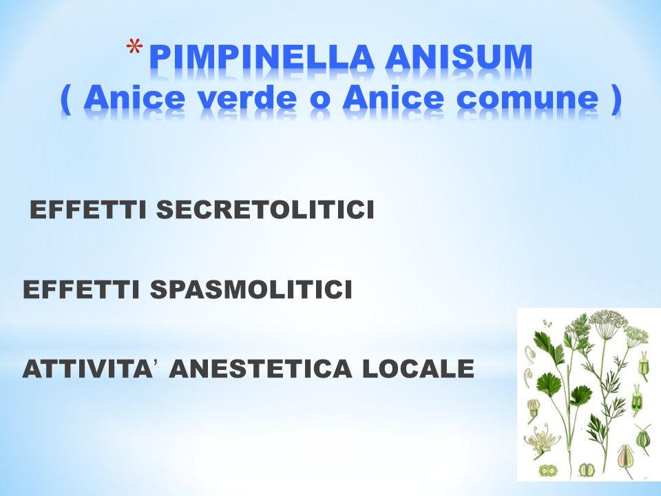 PIMPINELLA ANISUM ( Anice verde o Anice comune )