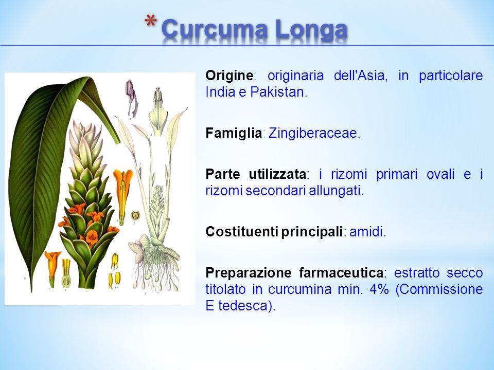 Curcuma Longa Origine: originaria dell Asia, in particolare India e Pakistan. Famiglia: Zingiberaceae.