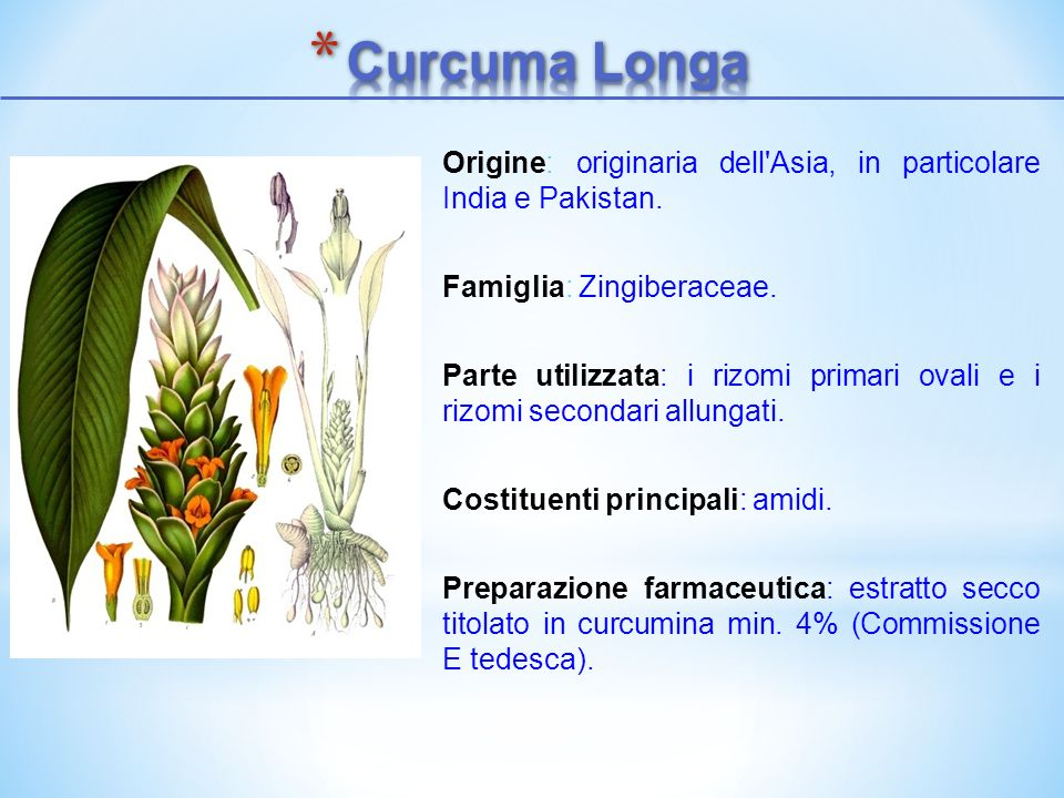 Curcuma LongaOrigine: originaria dell Asia, in particolare India e Pakistan. Famiglia: Zingiberaceae.
