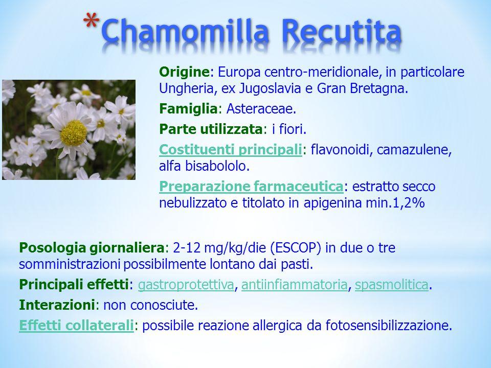 Chamomilla Recutita Origine: Europa centro-meridionale, in particolare Ungheria, ex Jugoslavia e Gran Bretagna.