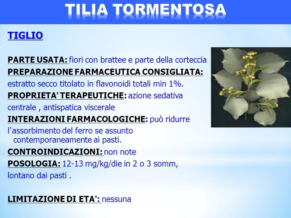 TILIA TORMENTOSA TIGLIO