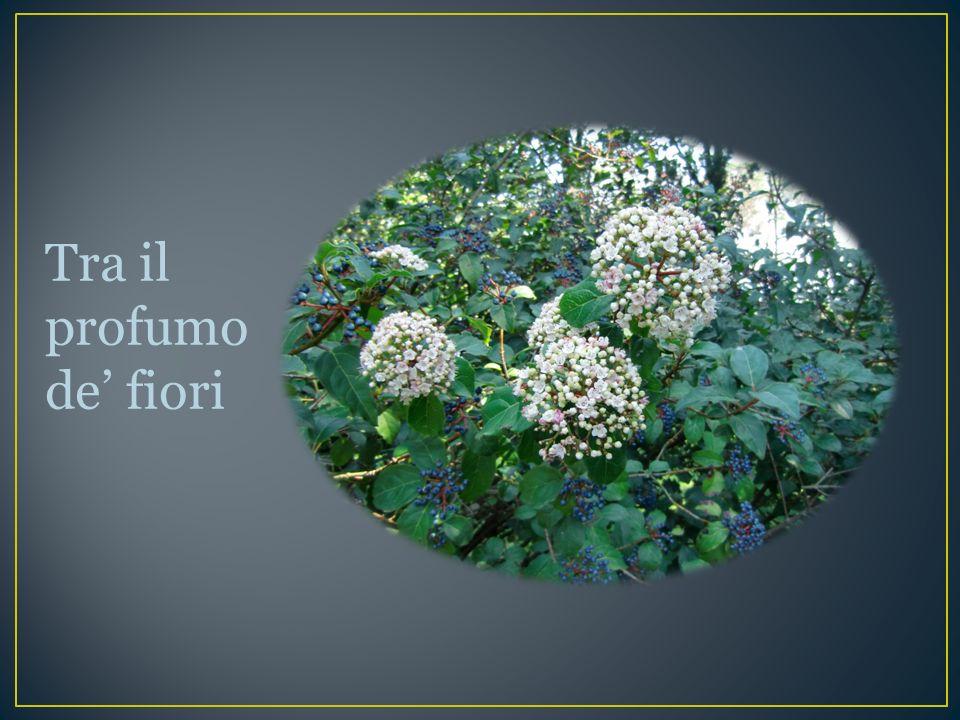 Tra il profumo de' fiori