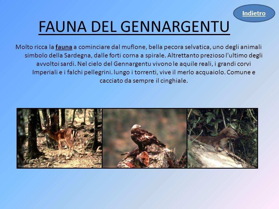 FAUNA DEL GENNARGENTU Indietro