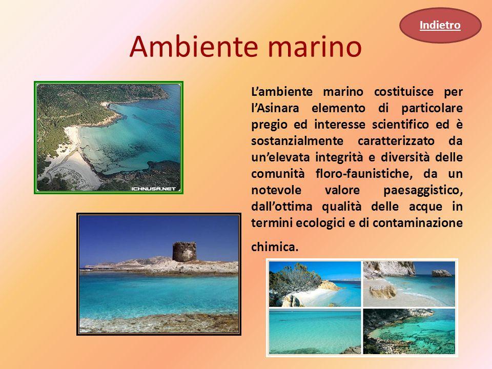 Indietro Ambiente marino.