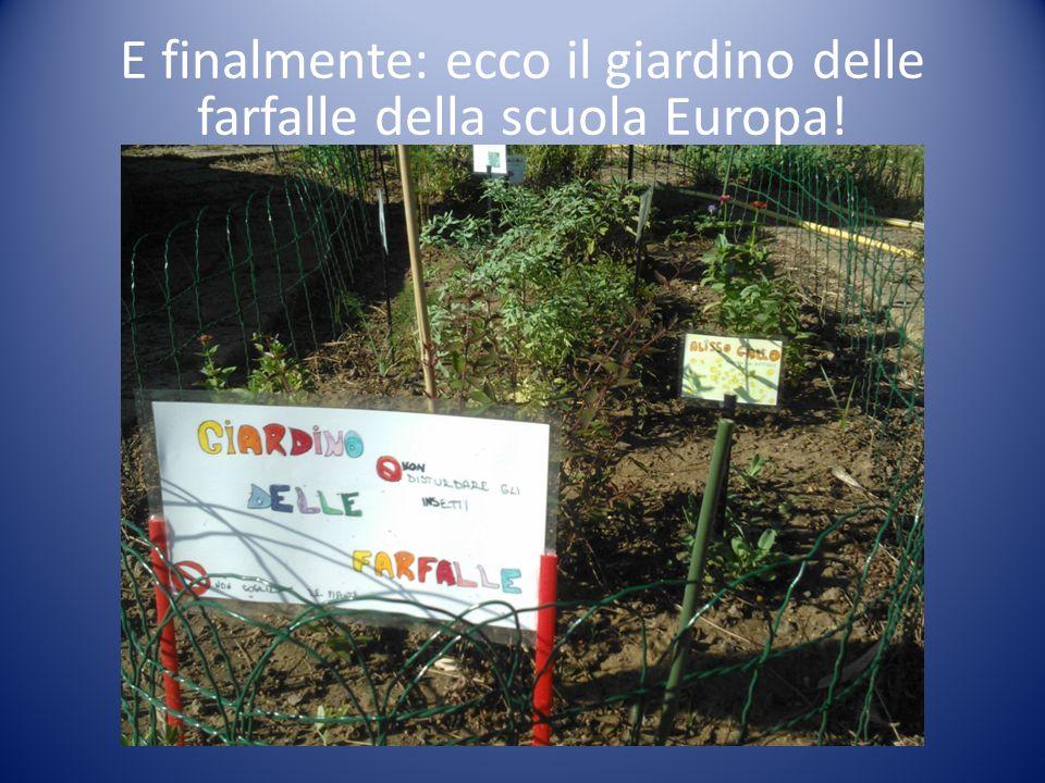 E finalmente: ecco il giardino delle farfalle della scuola Europa!