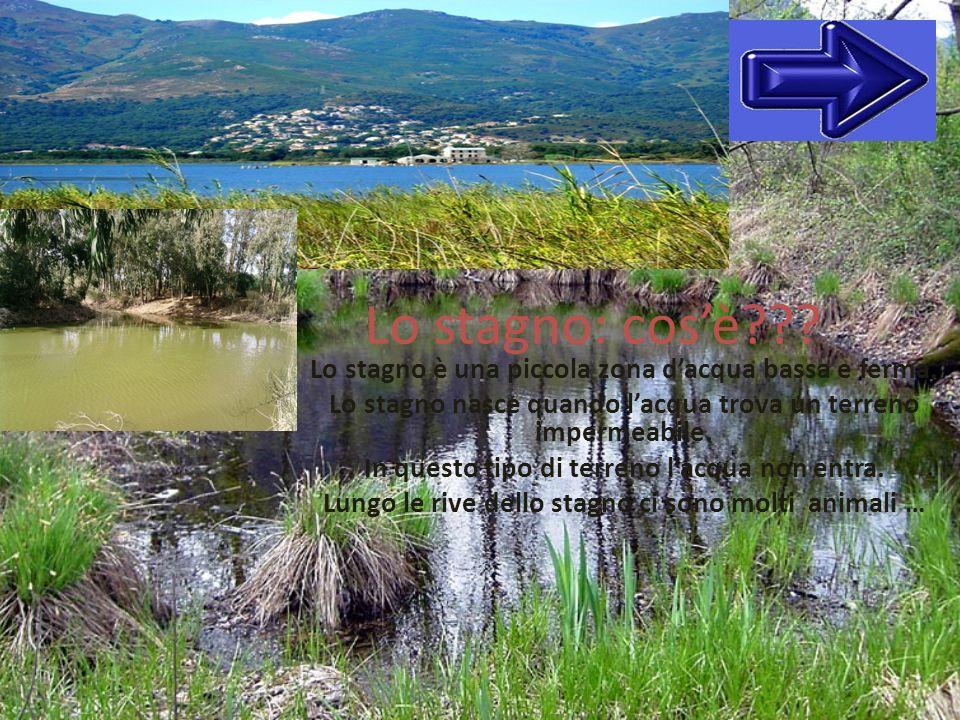 Lo stagno: cos'è Lo stagno è una piccola zona d'acqua bassa e ferma. Lo stagno nasce quando l'acqua trova un terreno impermeabile.