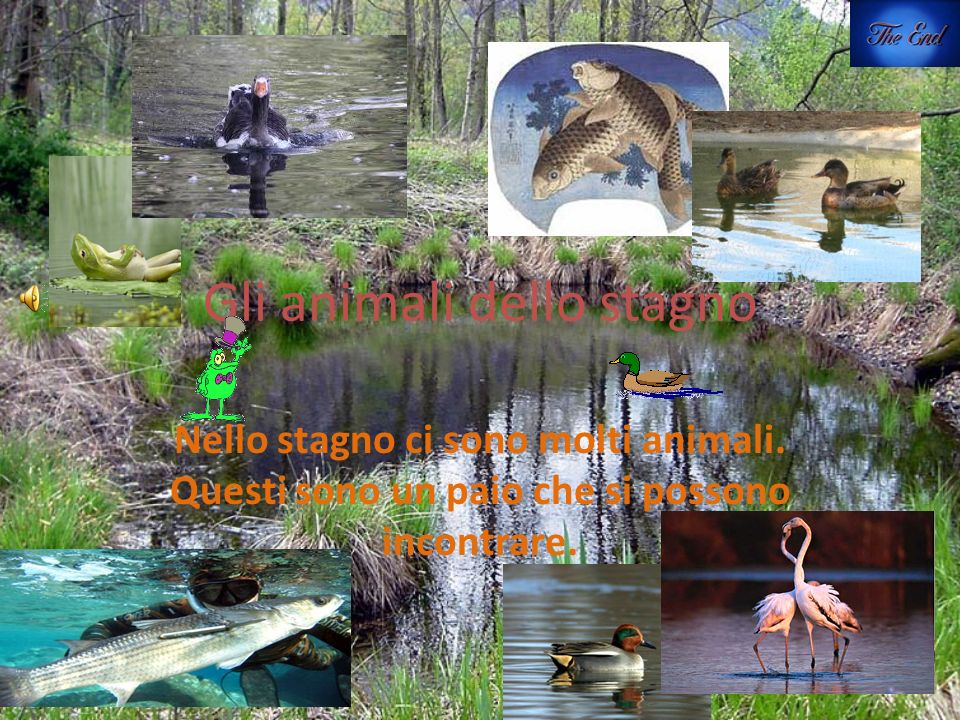 L ecosistema di uno stagno ppt video online scaricare for Animali da stagno