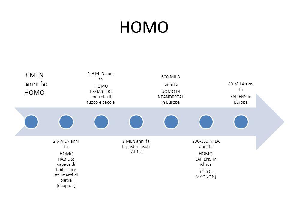 HOMO 3 MLN anni fa: HOMO 2.6 MLN anni fa