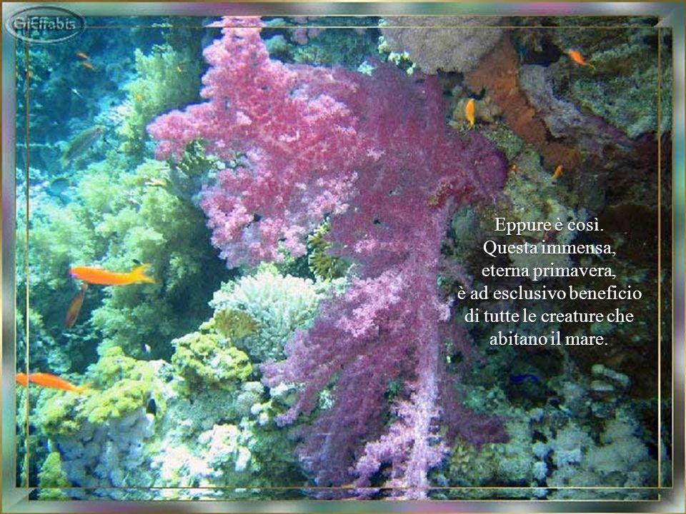 è ad esclusivo beneficio di tutte le creature che abitano il mare.