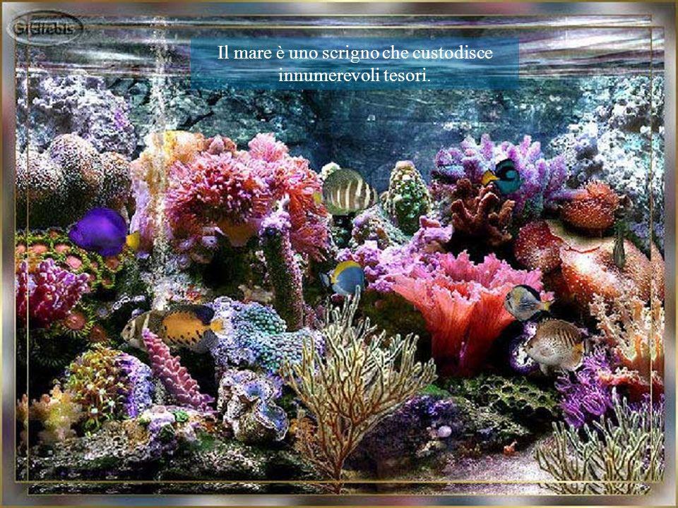 Il mare è uno scrigno che custodisce innumerevoli tesori.