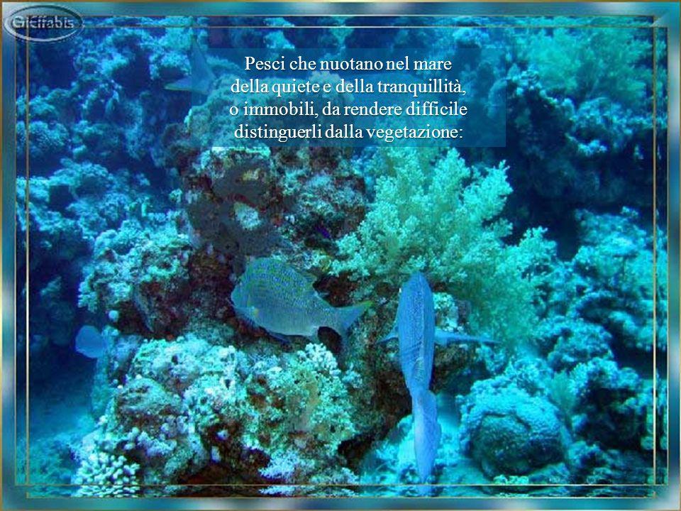 Pesci che nuotano nel mare della quiete e della tranquillità,