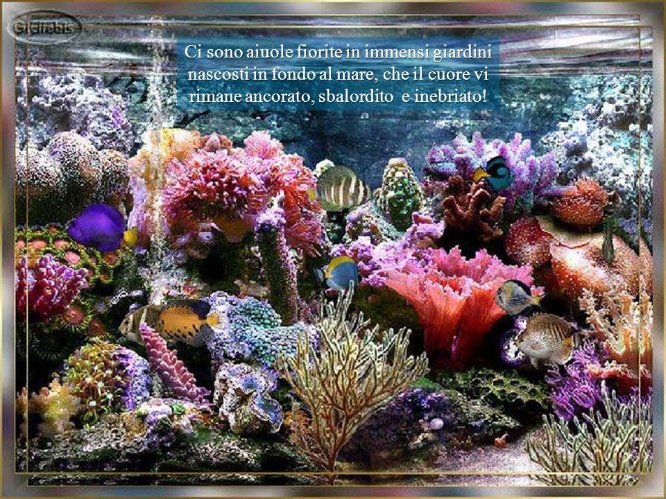 Ci sono aiuole fiorite in immensi giardini nascosti in fondo al mare, che il cuore vi rimane ancorato, sbalordito e inebriato!