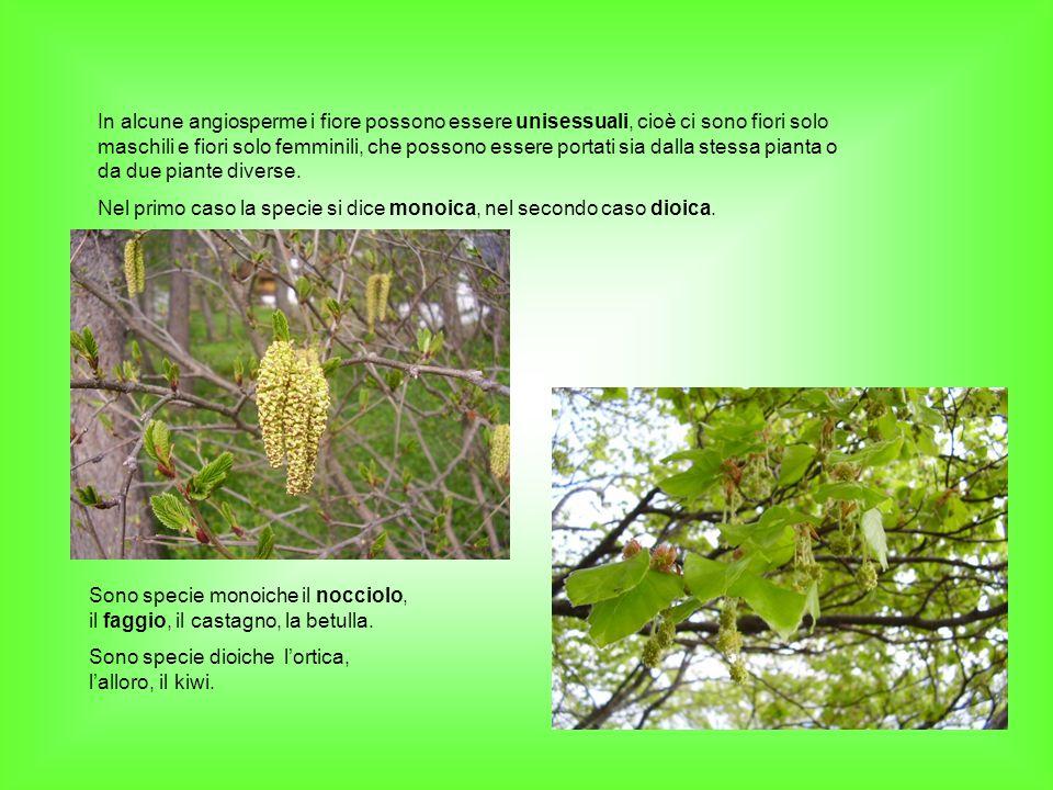 In alcune angiosperme i fiore possono essere unisessuali, cioè ci sono fiori solo maschili e fiori solo femminili, che possono essere portati sia dalla stessa pianta o da due piante diverse.