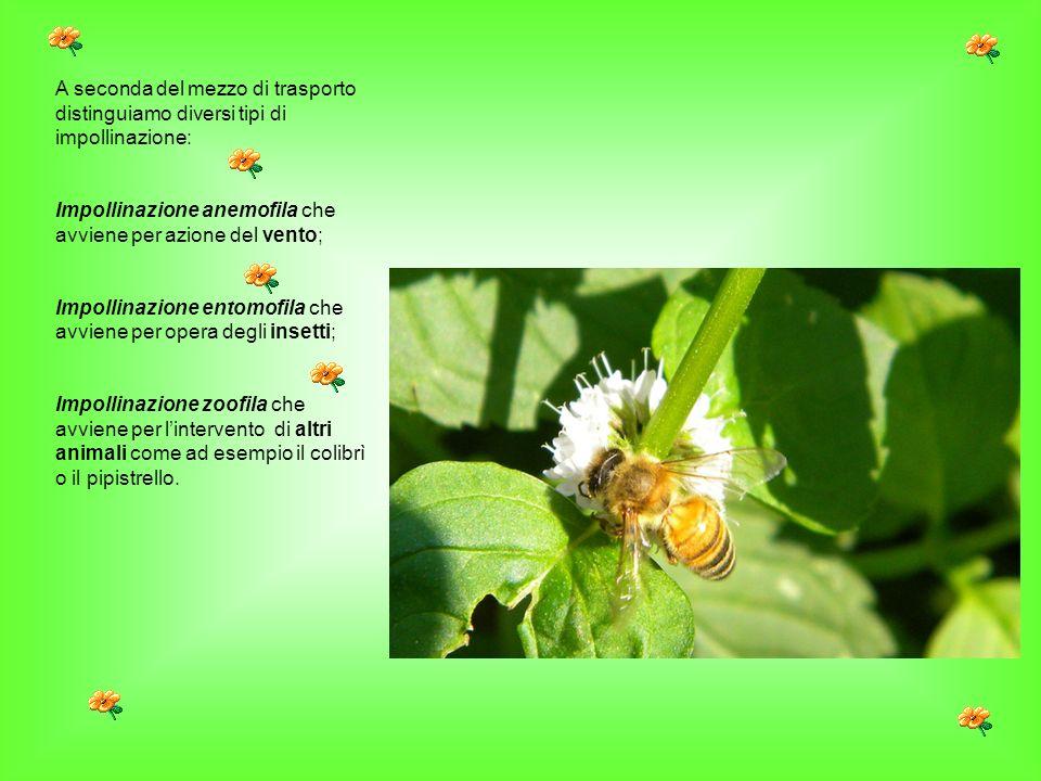 A seconda del mezzo di trasporto distinguiamo diversi tipi di impollinazione: