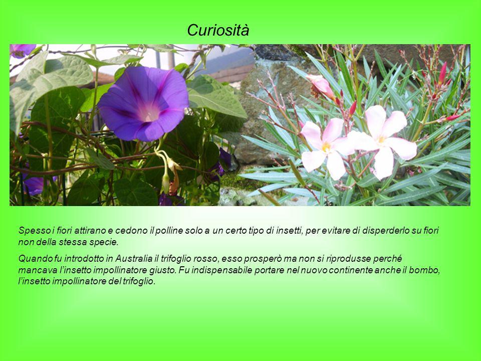 Curiosità Spesso i fiori attirano e cedono il polline solo a un certo tipo di insetti, per evitare di disperderlo su fiori non della stessa specie.