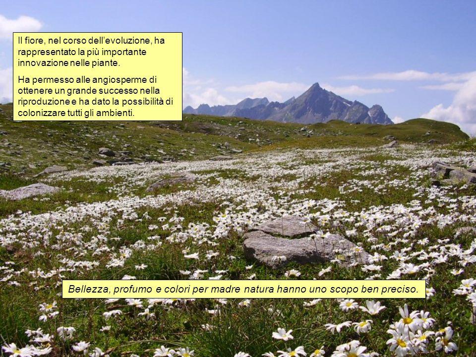 Il fiore, nel corso dell'evoluzione, ha rappresentato la più importante innovazione nelle piante.