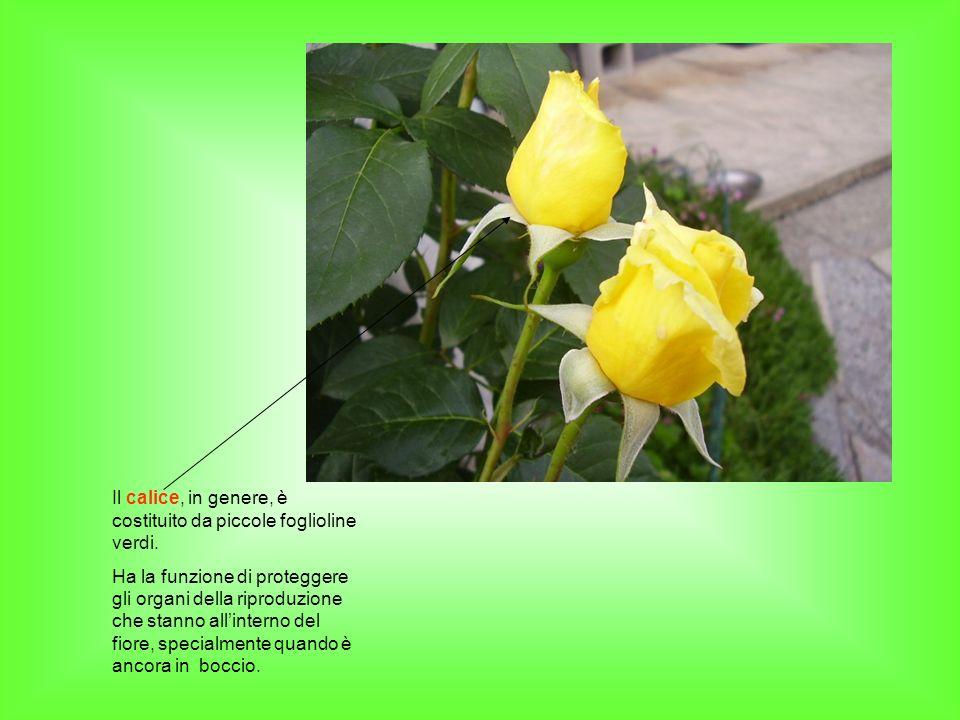 la riproduzione nelle angiosperme ppt video online scaricare