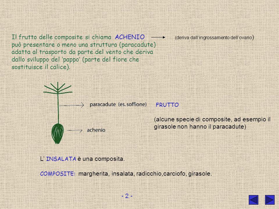 Il frutto delle composite si chiama ACHENIO