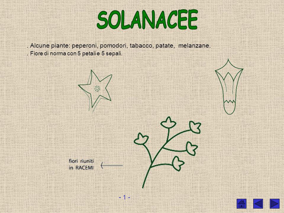 SOLANACEE . Alcune piante: peperoni, pomodori, tabacco, patate, melanzane. . Fiore di norma con 5 petali e 5 sepali.