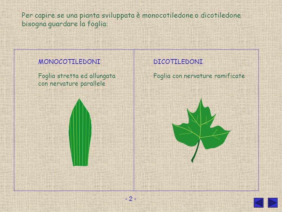 Per capire se una pianta sviluppata è monocotiledone o dicotiledone