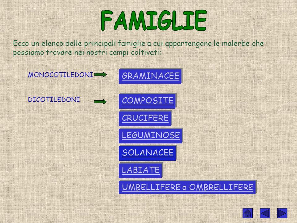 FAMIGLIE GRAMINACEE COMPOSITE CRUCIFERE LEGUMINOSE SOLANACEE LABIATE
