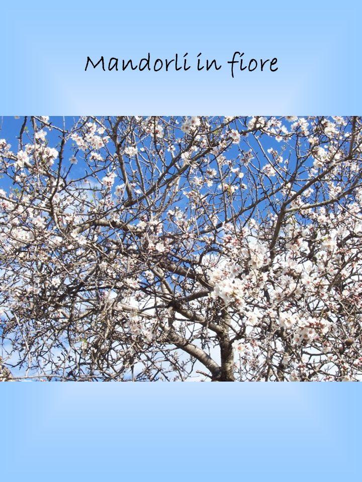 Mandorli in fiore