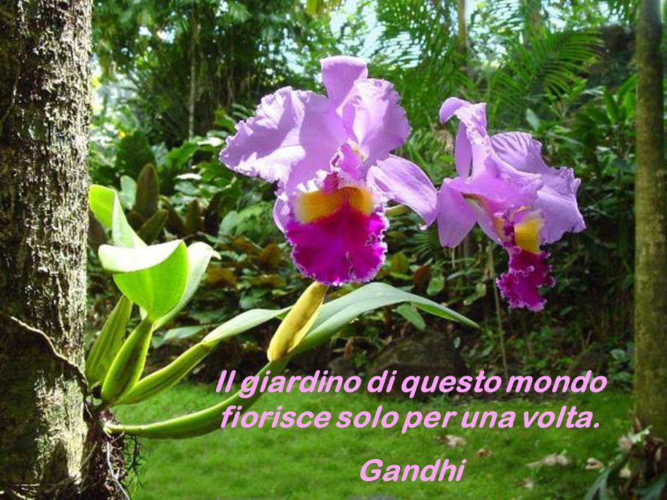 Il giardino di questo mondo fiorisce solo per una volta.